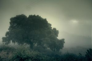 Foggy Forest by CrawlingGirl