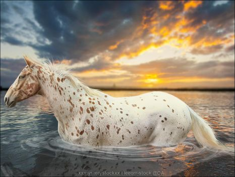 At Peace by VIP-EquineArt