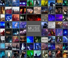 MUSE by felst