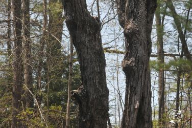Jaw Dropped Tree Witness Angry Bamboom by EsBest