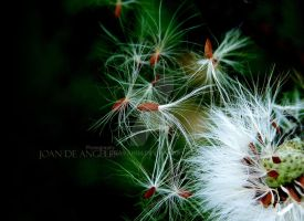 Dandelion On 1 by JDaVanim