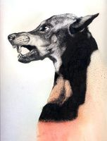 Stipple - Doberman by Lorr