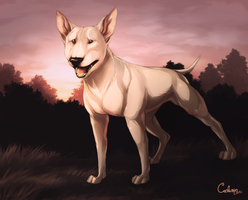 Bull Terrier by Cederin