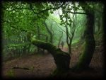 A WALK IN THE FOREST by TADBEER