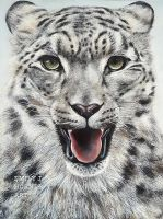 Snow Leopard Portrait by emilyjhorner