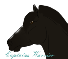 2804 Captains Warrior by MysticRoseStable