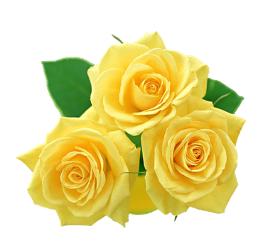 Yellow-Rose by yotoots