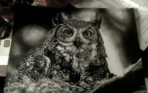 Owl by Supertimor1