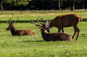 Richmond Park, 18/09/15. by LouHartphotography