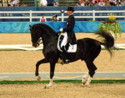 dressage by confed4life