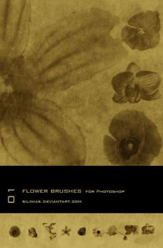 Flower Brushes PS by silinias