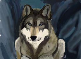 Eyes of the Wolf by jennypip