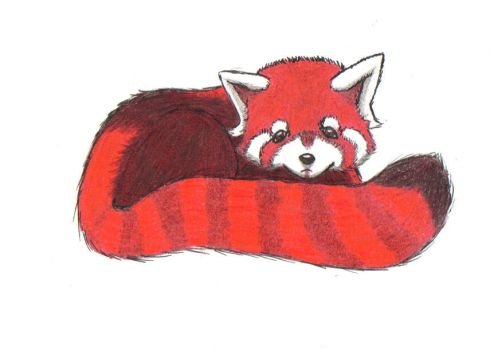 Red Panda by Clairfiore