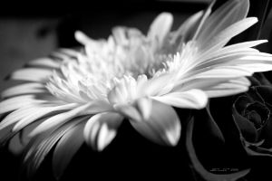 November is BW Gray 9 by martaraff
