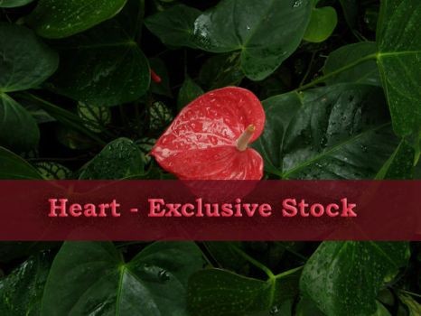 ExclStock Heart by Gwathiell