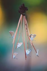 Butterfly-284 by Sblourg