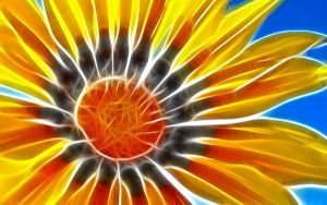 sun_flower by mikelonel