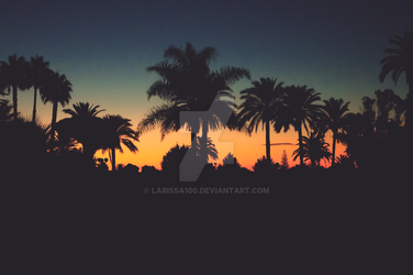 Palm Tree Silhouette by Larissa100