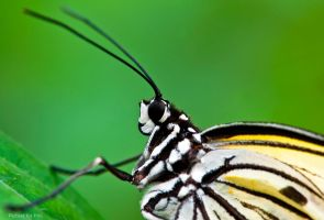 Butterfly by PictureByPali