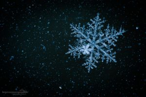 Snowflake by chriskaula