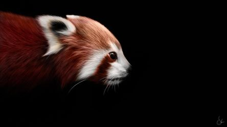 + Red Panda + by sven-werren