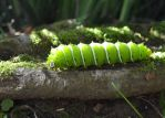Green caterpillar by X-Alex