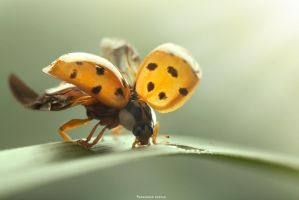 Magic of Lady-Bug by MohannadKassab