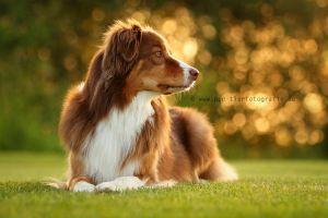 Toffee against the light II by Partridge-PetPics