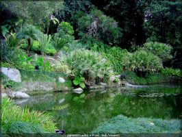 Japanese Garden 12 Pond by AndySerrano