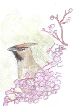 Mr Waxwing by therealmoshmonkey