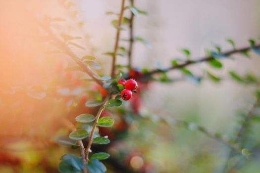 Light leak and berries by DorottyaS