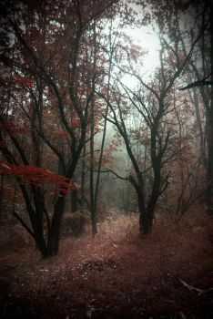 Red Forest by Tree-Girl
