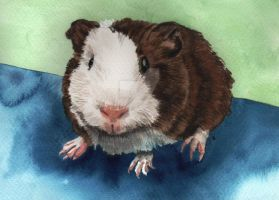 Ginger the Guinea Pig by RamonaQ