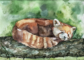 Red panda, watercolour by LomovtsevaOlga