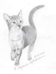 Kimmi (shelter cat) by Sillageuse