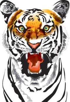 Tiger by w3s