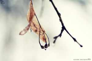 winter's fade by lisarime