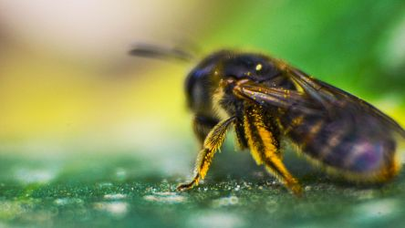 Insect by Herculesi