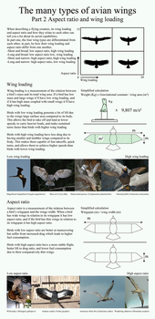The many types of avian wings. part 2 by camelpardia