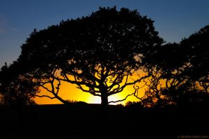 Oak Tree Sunset by runique
