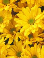 Yellow flowers by bjbrizee7