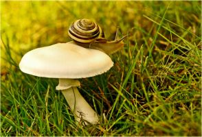 The snail and the mushroom by Lentekriebel