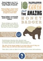 Honeybadger Informational Poster by happy-smiley-robot