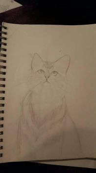 Cat sketch by CheshireCatAliceJay