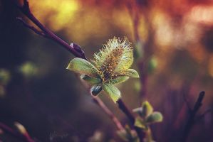 Lonely Catkin by Weissglut