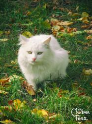 White Cat :) by UAkimov09