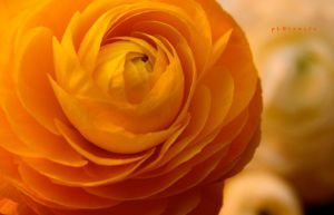 fLoweR by pLateauce