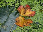 The Beauty of Autumn by Thelma1