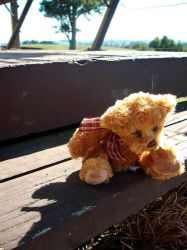 Teddy by likescarecrows