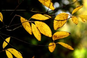 leafs in autumn light by anmaria